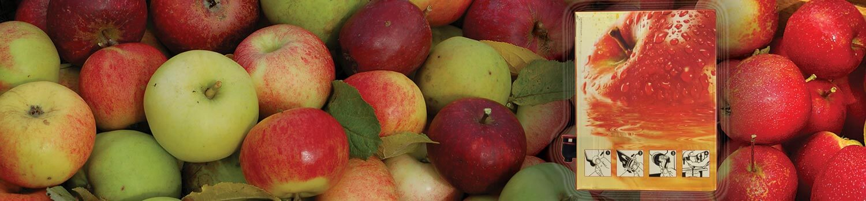 Økologisk eplejuice - elvathun.no